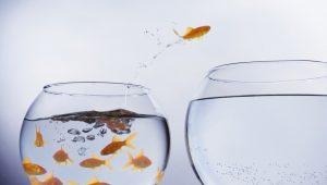 saia do velho mundo e desbrave novos mares. Peixe pulando de um aquário cheio para outro vazio.