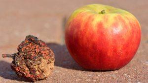 regeneração - futuros regenerativos - maçã desidratada - maca desidratada