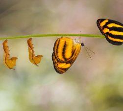 imagens das várias fases de metamorfose da borboleta desde a lagarta até a borboleta de asas abertas.